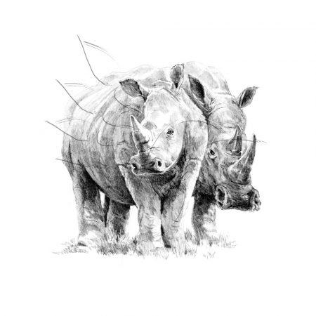 Rajzkészlet előrenyomott vázlattal - Sketching Made Easy A/4 - Rhino Pair