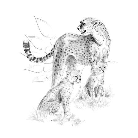 Rajzkészlet előrenyomott vázlattal - Sketching Made Easy A/4 - Cheetah & Cub