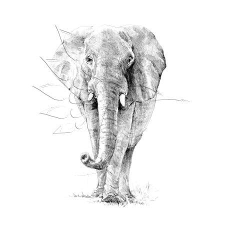 Rajzkészlet előrenyomott vázlattal - Sketching Made Easy A/4 - Elephant