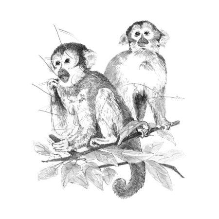 Rajzkészlet előrenyomott vázlattal - Sketching Made Easy A/4 - Monkeys