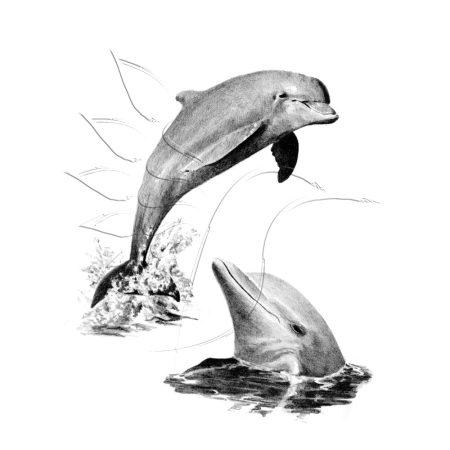Rajzkészlet előrenyomott vázlattal - Sketching Made Easy A/4 - Dolphins