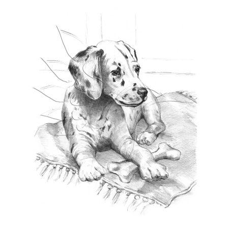 Rajzkészlet előrenyomott vázlattal - Sketching Made Easy A/4 - Dalmation Pup