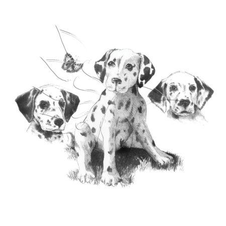 Rajzkészlet, nagy, előrenyomott vázlattal - Sketching Made Easy Large - Dalmatians