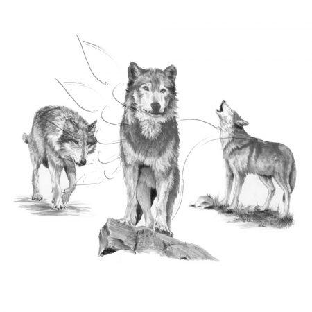 Rajzkészlet, nagy, előrenyomott vázlattal - Sketching Made Easy Large - Wolves