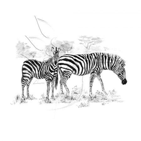 Rajzkészlet, nagy, előrenyomott vázlattal - Sketching Made Easy Large - Zebras
