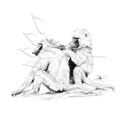 Rajzkészlet, nagy, előrenyomott vázlattal - Sketching Made Easy Large - Baboons