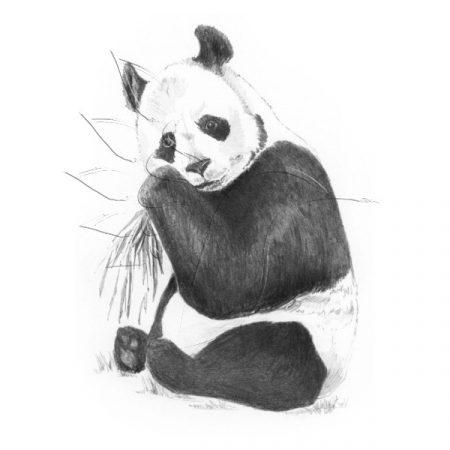 Rajzkészlet előrenyomott vázlattal - Sketching Made Easy Mini A/5 - Panda