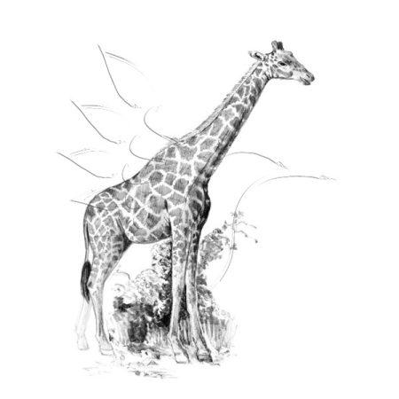 Rajzkészlet előrenyomott vázlattal - Sketching Made Easy Mini A/5 - Giraffe