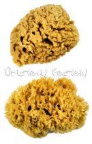 Festő Szivacsok - Royal EXTRA LARGE Wool Sponge - 2db-os készlet
